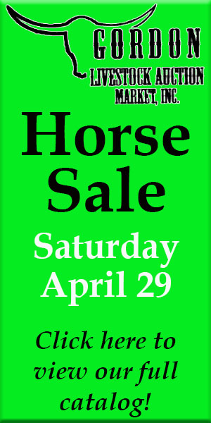 Gordon Livestock Horse Sale