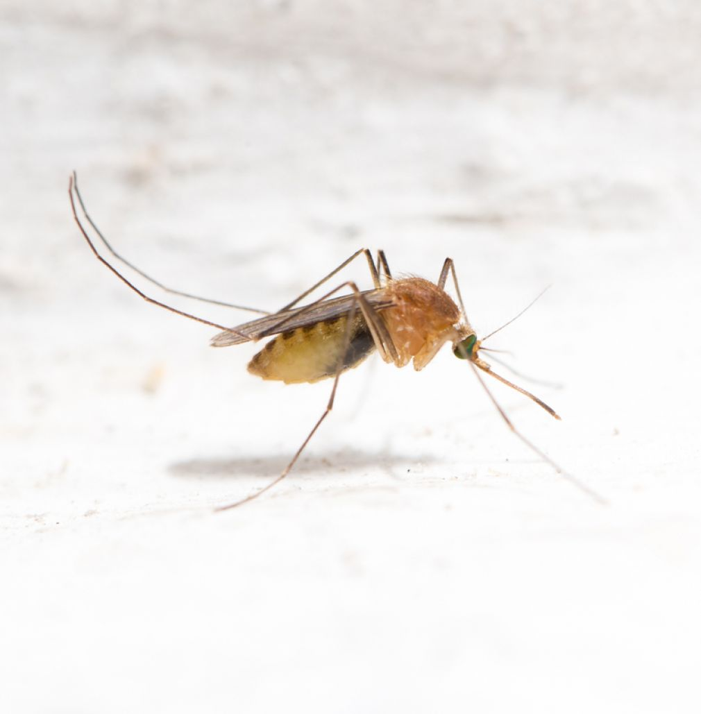 Panhandle mosquitoes have tested positive for the West Nile Virus