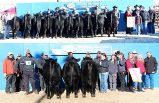 Top: Vin-Mar Cattle Co., Gordon, Neb., won reserve grand champion carload of bulls at the 2016 National Western Stock Show's Angus Carload and Pen Show, Jan. 16 in Denver, Colo. The 10 January and February 2015 bulls posted an average weight of 1,399 pounds and are sired by S A V Hot Iron 0941; Vin-Mar Johnny Cash 3513; Vin-Mar Monumental 3575; S A V Resource 1441; Bushs Triple Threat 851; S A V Pursuit 0160; and EXAR Denver 2002B.   Bottom: Krebs Ranch, Gordon, Neb., won reserve grand champion pen of three bulls at the 2016 National Western Stock Show's Angus Carload and Pen Show, Jan. 16 in Denver, Colo. The January and February 2015 bulls posted an average weight of 1,450 pounds and are sired by Barstow Cash and CFCC Black Jack 001. This pen first claimed early calf champion. Arlen Sawyer, Bassett, Neb.; Doug Slattery, Chappell Hill, Texas; and Phil Trowbridge, Ghent, N.Y., evaluated six carloads and 43 pens of three.