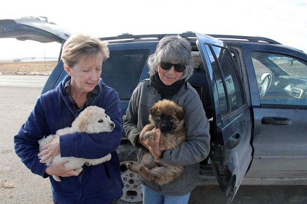 KC Willis and Jean Parker exchange puppies.