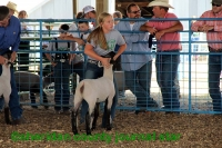 4-H Sheep & Goat Show 2018