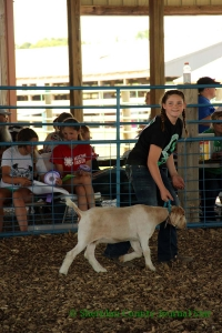 4-H Sheep & Goat Show 2019