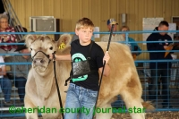Sheridan County Fair and Rodeo Beef Show 2018