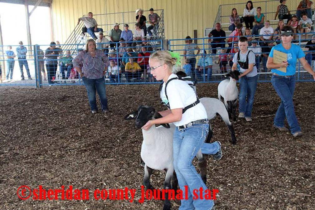 Sheep and Goat Show 2016
